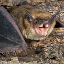 how to get bats to live in a bat house
