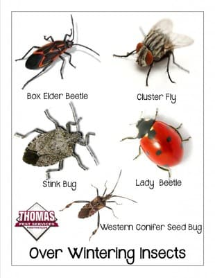 2013 A Bad Year For Stink Bugs